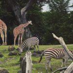 娘を連れて東山動物園へ!動物の菌をもらって免疫力アップ作戦